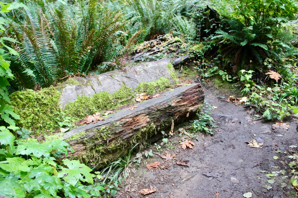 Vancouver Island, British Columbia - Ripple Rock Trail - An old carved tree bench