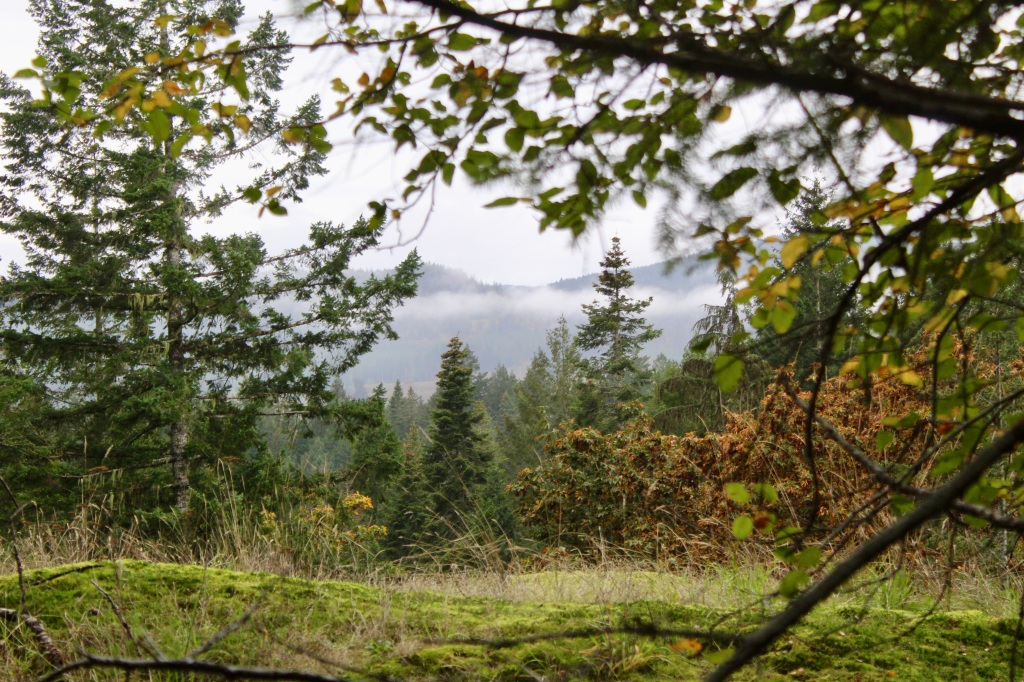 Vancouver Island, British Columbia - Ripple Rock Trail - View from a clearing