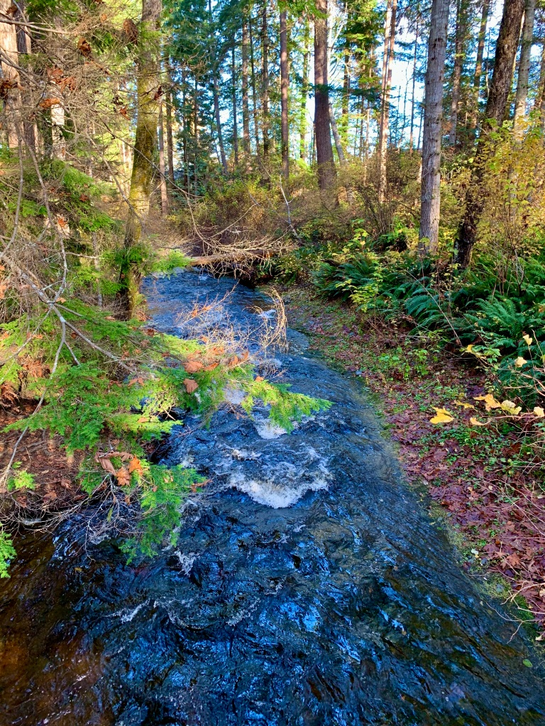 Campbell River, Vancouver Island, British Columbia - Willow Creek