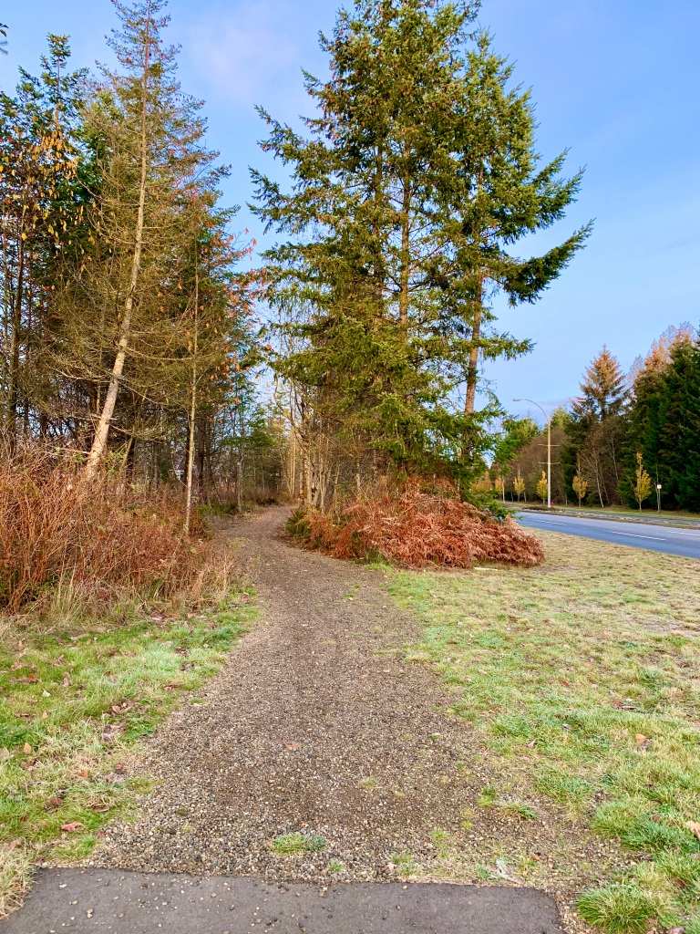 November 14th - Campbell River, Vancouver Island, British Columbia - After crossing S. Dogwood, I start at the beginning of the trail that leads me to Beaver Lodge Lands.