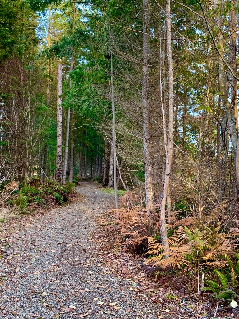 November 14th - Campbell River, Vancouver Island, British Columbia - I always enjoyed this part of the trail with its twists and turns.