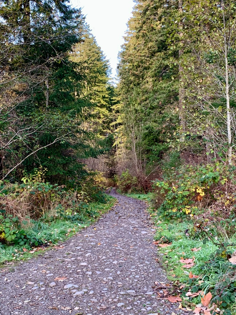 November 14th - Campbell River, Vancouver Island, British Columbia - Down the trail...