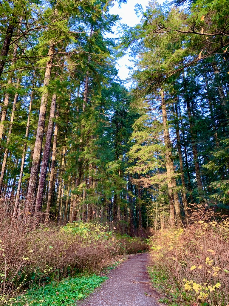 November 14th - Campbell River, Vancouver Island, British Columbia - Coming around the bend...