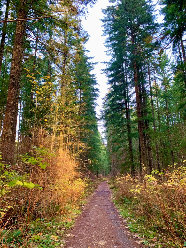 November 14th - Campbell River, Vancouver Island, British Columbia - To enter the forest!