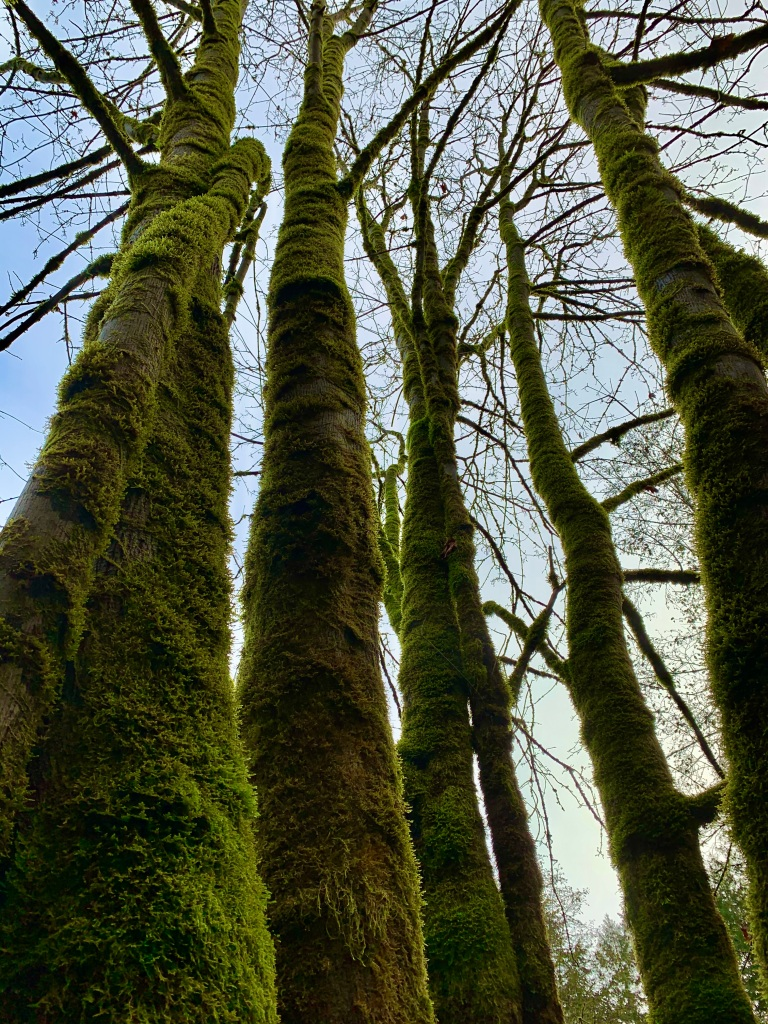 November 14th - Campbell River, Vancouver Island, British Columbia - Looking up at my special tree!