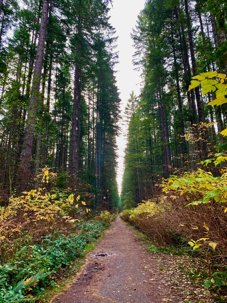 November 14th - Campbell River, Vancouver Island, British Columbia - I turned around at the 4km tree, looking at the trail before me - lined with beautiful shades of yellow and green.