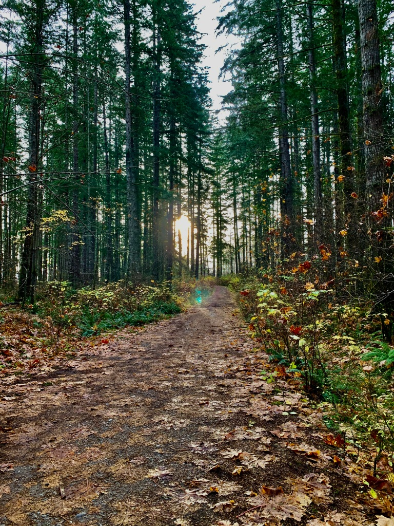November 14th - Campbell River, Vancouver Island, British Columbia - Coming back to the turn in the trail that takes me to the parking lot.
