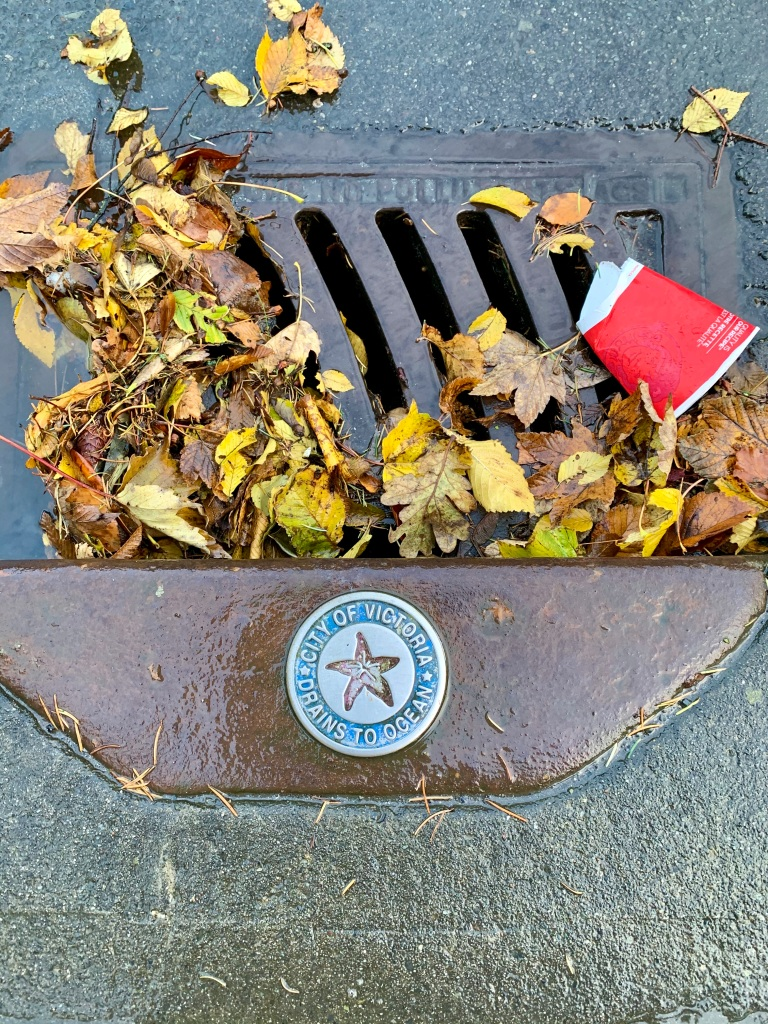 November 15th, 2020 - Victoria, Vancouver Island, British Columbia - Morning run - Water on roads drains to ocean