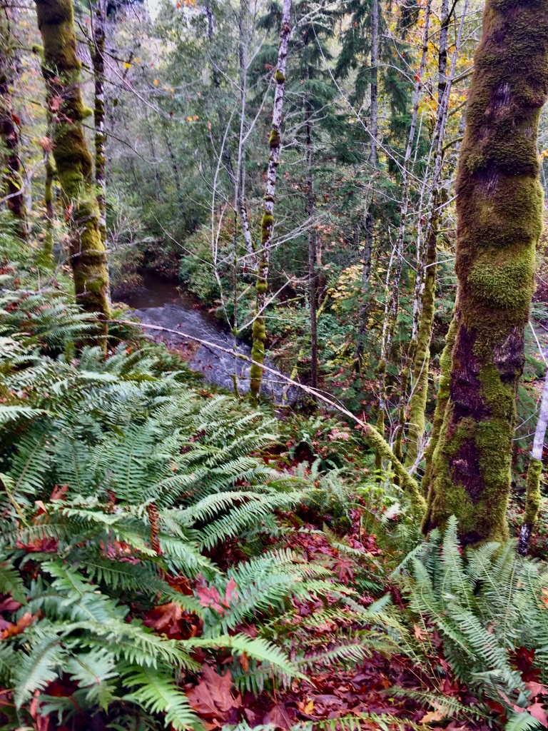 Campbell River, Vancouver Island, British Columbia - View of Willow Creek while running the Willow Creek Trail