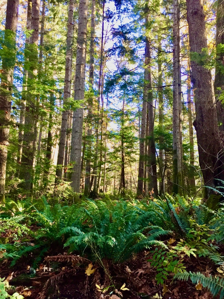 Oyster River, Vancouver Island, British Columbia - Trees and Ferns!
