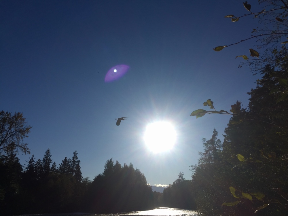 Oyster River, Vancouver Island, British Columbia - Oyster River - Blue Heron