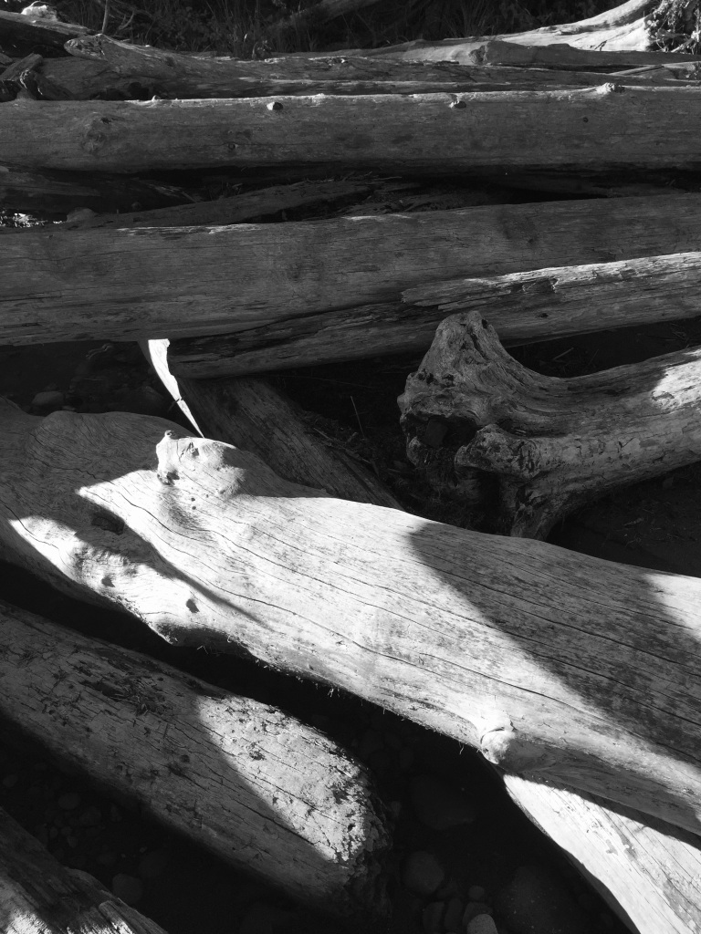 Oyster River, Vancouver Island, British Columbia - Driftwood