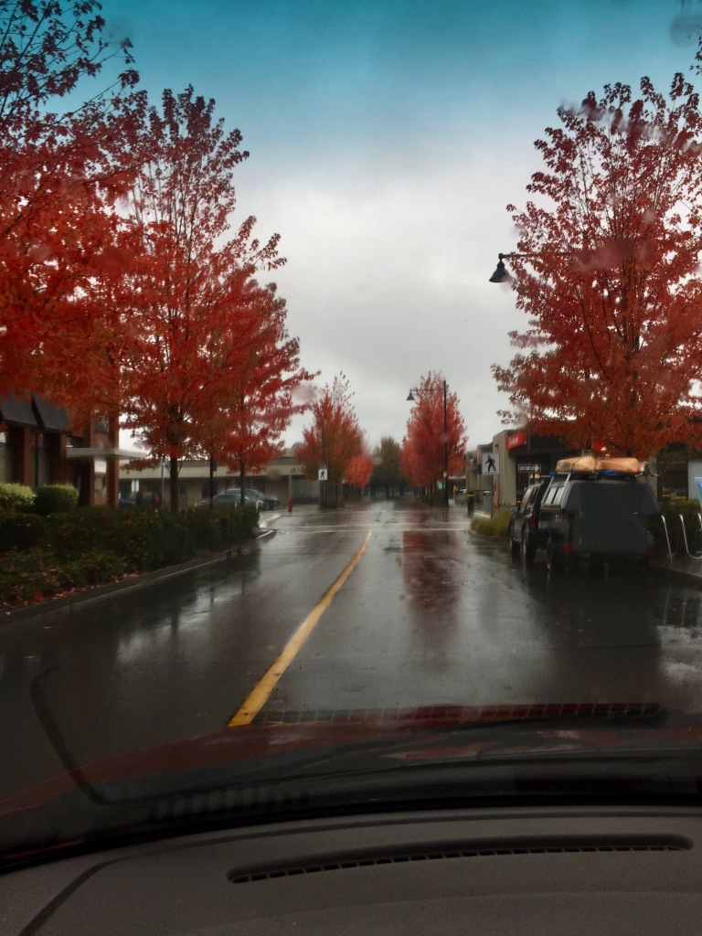Campbell River, Vancouver Island, British Columbia - Autumn pink leaves