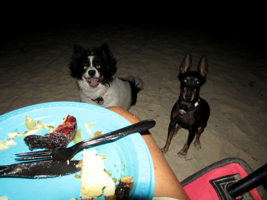 October, 2016 - North of Dukhan, Qatar - Camping on the Beach - Pooh Bear and Marlow never too far from the food!