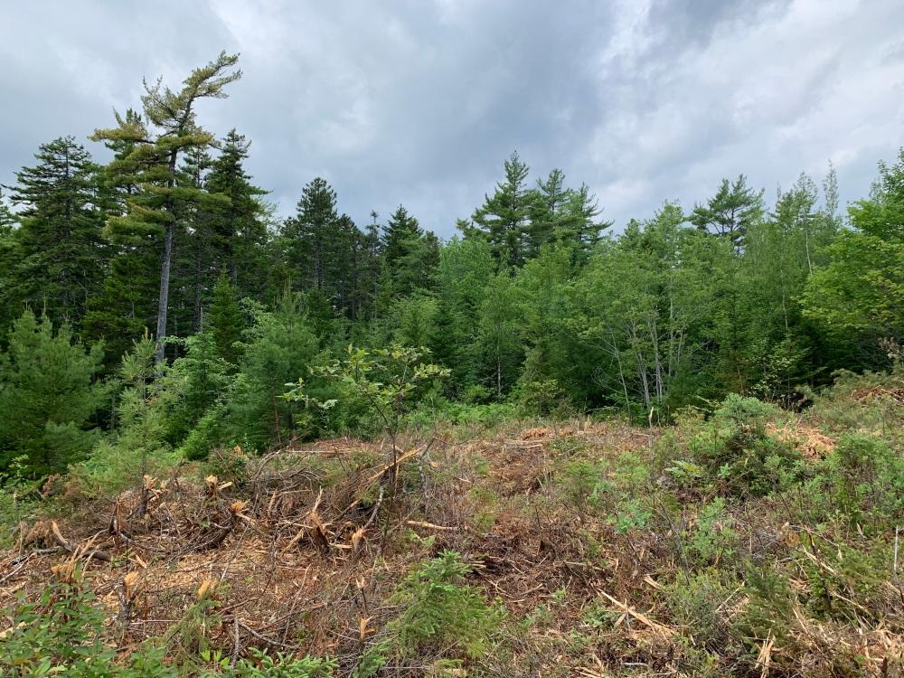 June 29th, 2021 - East Uniacke, Nova Scotia - Meek Arm Cove - First bit of clearing to make a driveway
