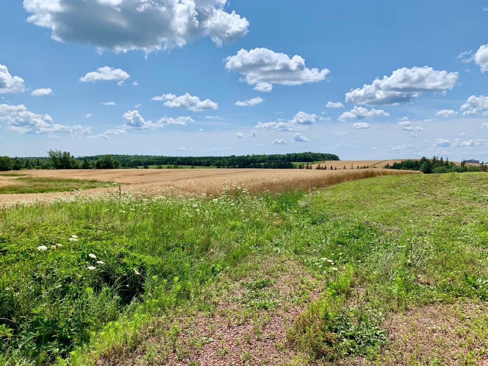 July 25th, 2021 - Brookfield, Nova Scotia - Farmland