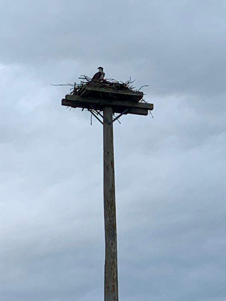 August 13th, 2021 - Morris Lake, Dartmouth, Nova Scotia - CKNS Wednesday Night Paddle - Osprey nest at Birches Park