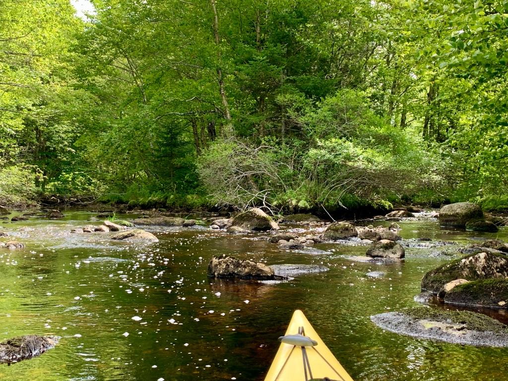 September 1st, 2021 - Mockingee Lake, Vaughan, Nova Scotia - Two mouths of the Avon River emptying into Mockingee Lake