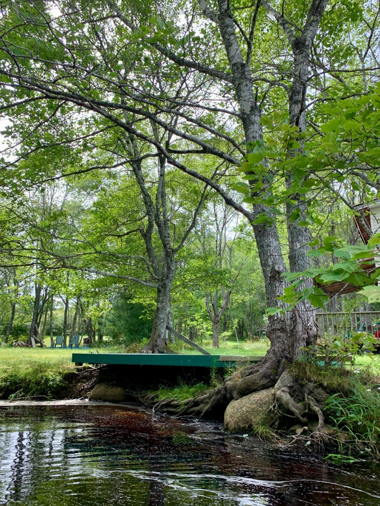 September 1st, 2021 - Mockingee Lake, Vaughan, Nova Scotia - Interesting tree roots