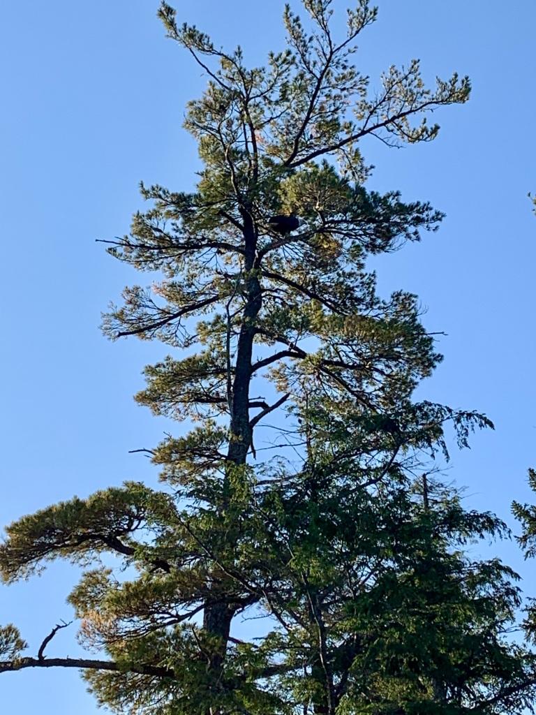 October 9th - Lake William, Waverley, Nova Scotia - Early Morning Autumn Paddle - Bald Eagle